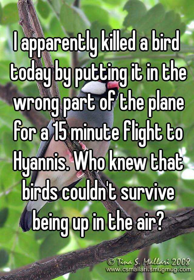 I apparently killed a bird today by putting it in the wrong part of the plane for a 15 minute flight to Hyannis. Who knew that birds couldn't survive being up in the air?