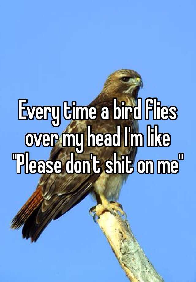 "Every time a bird flies over my head I'm like ""Please don't shit on me"""