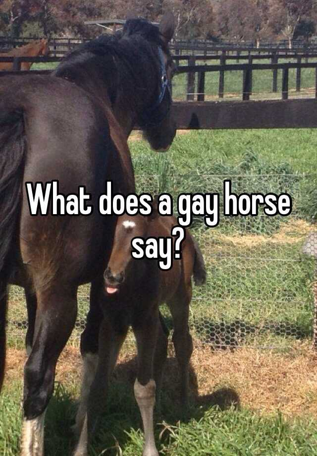 What does a gay horse say?