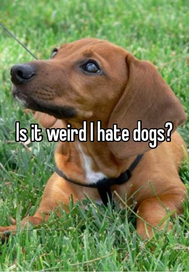 Is it weird I hate dogs?