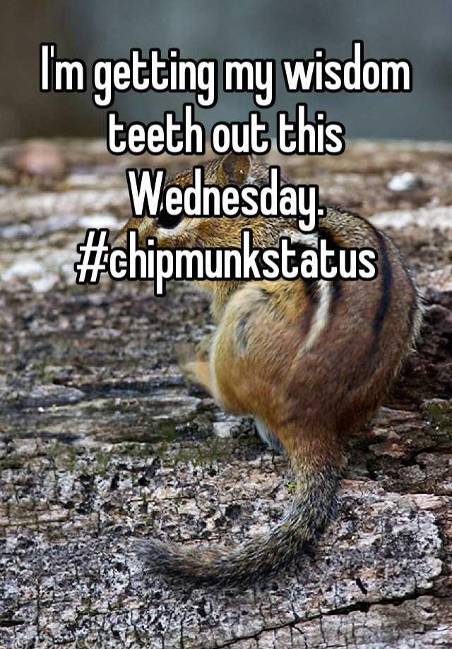 I'm getting my wisdom teeth out this Wednesday. #chipmunkstatus