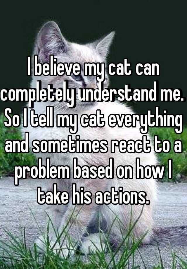 I believe my cat can completely understand me. So I tell my cat everything and sometimes react to a problem based on how I take his actions.