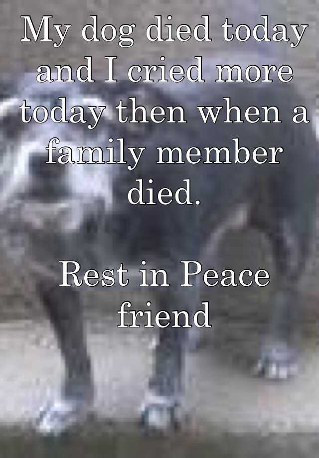 My dog died today and I cried more today then when a family member died.  Rest in Peace friend