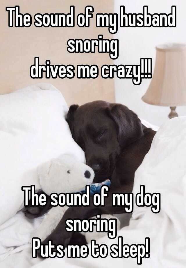 The sound of my husband  snoring  drives me crazy!!!     The sound of my dog snoring  Puts me to sleep!