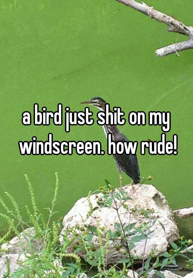 a bird just shit on my windscreen. how rude!