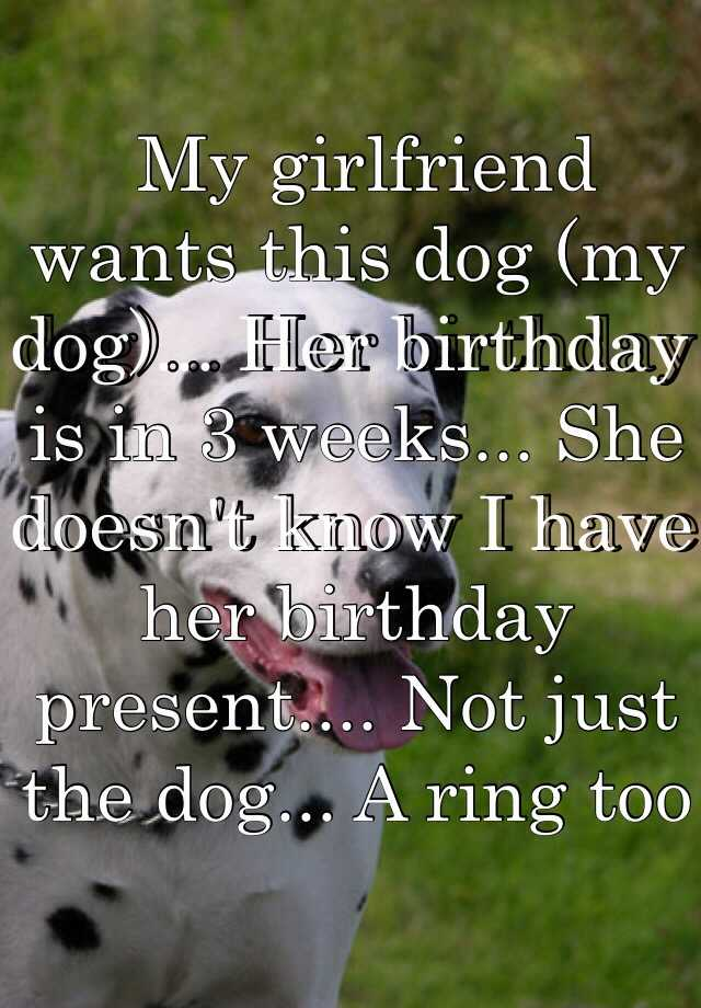 My girlfriend wants this dog (my dog)... Her birthday is in 3 weeks... She doesn't know I have her birthday present.... Not just the dog... A ring too